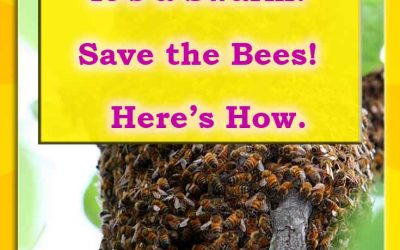 Find someone to save a honey bee swarm?