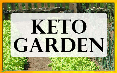 Planting a Keto Diet Garden? – Best Keto Vegetables