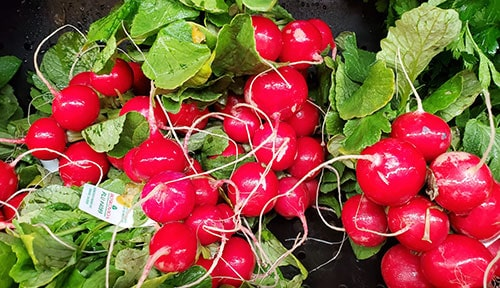 Picture of Radishes